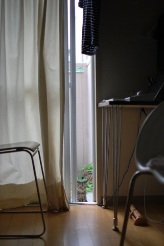ノラ猫1あら、窓が開いてますよ